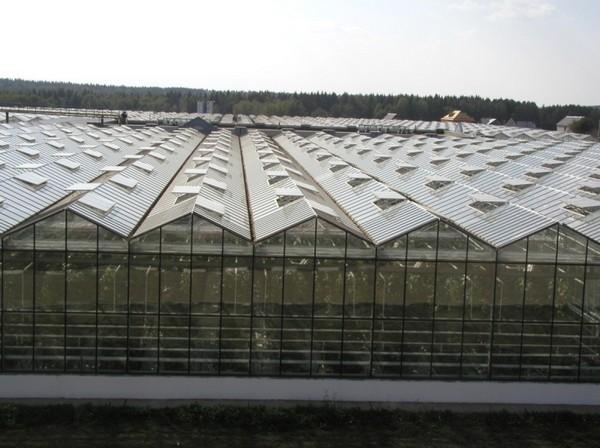 Форточки вентиляционной системы промышленной теплицы